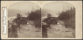 Banks of the Niagara, Goat Island, from Robert N. Dennis collection of stereoscopic views.png