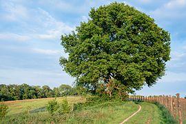Baum in Neandertal.jpg