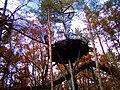 Baumwipfelpfad - panoramio (3).jpg