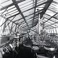 Bayview greenhouse.jpg
