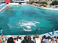 Bayworld-dolphins-001.jpg