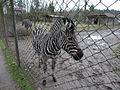 Bdg zoo 25 12-2014.jpg