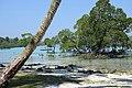 Beach Mangrove 4 (209598451).jpeg