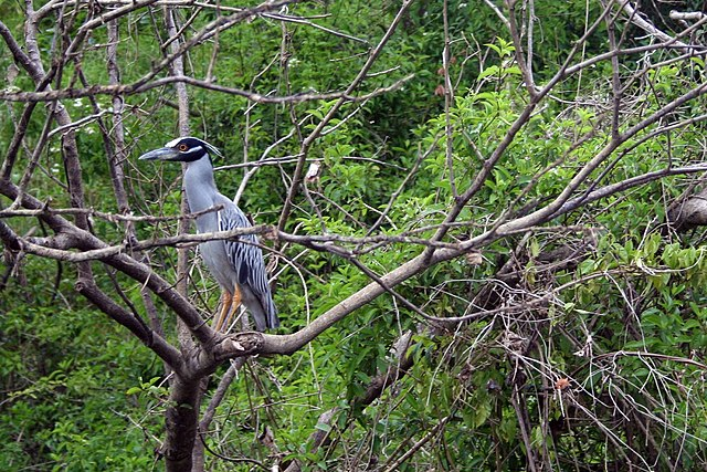 Prírodný ekosystém - dažďový prales v Belize