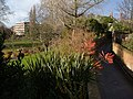 Belmont Park and Jesmond Road, Exeter - geograph.org.uk - 292025.jpg