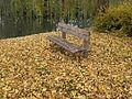 Bench autumn 03.JPG
