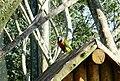 Beto Carrero Zoo - panoramio (27).jpg