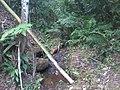 Bica d'água - Cachoeiras de Macacu, RJ - panoramio.jpg