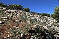 Bierain Sub-District, Jordan - panoramio (5).jpg