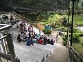 Bird Park in Kuala Lumpur (Malaysia) (42).jpg