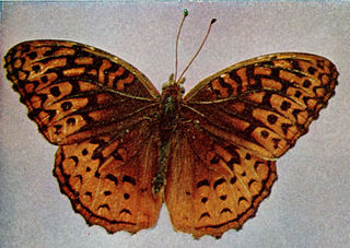 Aphrodite fritillary species of butterfly