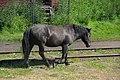 Black horse at railway station Port Baikal (31896330300).jpg