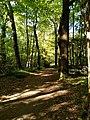 Bois de la Desnerie (Nantes, 44, France) 2.jpg