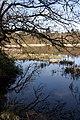 Bolam Lake - geograph.org.uk - 387867.jpg
