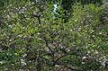 BotGardenFomin DSC 0258-1.jpg