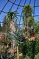 Botanischer Garten der Universität Zürich nach Umbau - 'Tiefland' 2014-03-08 14-53-42.JPG
