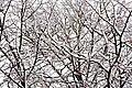 Branches (15954444847).jpg