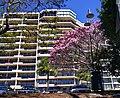 Brisbane - panoramio (17).jpg