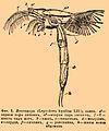 Brockhaus and Efron Encyclopedic Dictionary b34 750-1.jpg