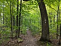Bruce Trail marker in Clappison Woods, Watertown - 20190929 - 02.jpg
