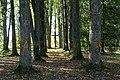 Bruknas kapi - cemetery - panoramio.jpg