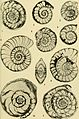 Bulletins of American paleontology (1958-1959) (20316391479).jpg
