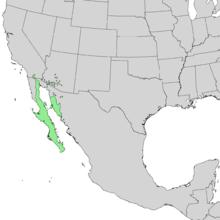 Bursera microphylla range map 1.png