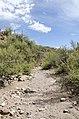 Butcher Jones Trail to Pinter's Point Loop, Tonto National Park, Saguaro Lake, Ft. McDowell, AZ - panoramio (162).jpg