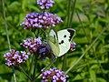 ButterflyFlower (43791535922).jpg
