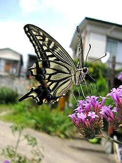 Butterfly macro shot.jpg