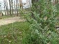 Byłem na Wilczych Ługach małymi krokami idzie wiosna 10 - panoramio.jpg