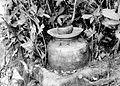 COLLECTIE TROPENMUSEUM Duivelskruik bij de top van de Sirimau op Ambon TMnr 10000858.jpg
