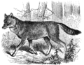 Cambridge Natural History Mammalia Fig 209.png