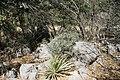 Camino del Cuatro, Sierra Zapalinamé, Saltillo Coahuila - panoramio (59).jpg