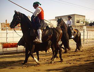 Campino - A campino on horseback