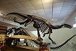 Camptosaurus jensen historic mount BYU.jpg