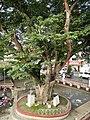 Candelaria,Quezonjf1860 14.JPG