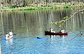 Canoe dogs close up (7018895681).jpg
