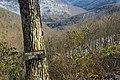 Canyon Vista (4) (8545101163).jpg