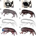 Capturing-Natural-Colour-3D-Models-of-Insects-for-Species-Discovery-and-Diagnostics-pone.0094346.g009.jpg