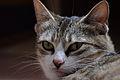 Cat face 04.jpg