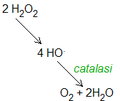Catalase reaction.png