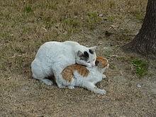 Warrior Cats Schwarzfu Ef Bf Bd