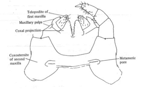 File:Centipede.tiff
