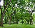Central Park Greenery.jpg