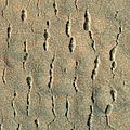 Chains of pit craters in Utopia Planitia 2.jpg