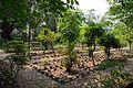 Charaka Udyan - Indian Botanic Garden - Howrah 2013-03-31 5713.JPG