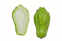 Chayote fruit cross section