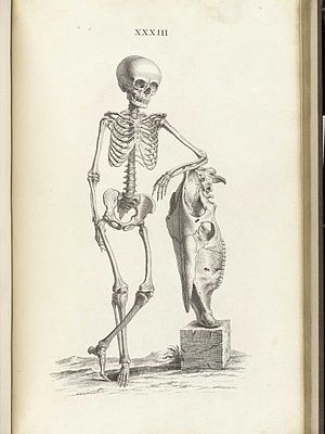 William Cheselden - A plate of Osteographia. Source: NLM