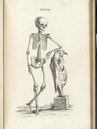 William Cheselden - A plate of Osteographia. Source: NLM